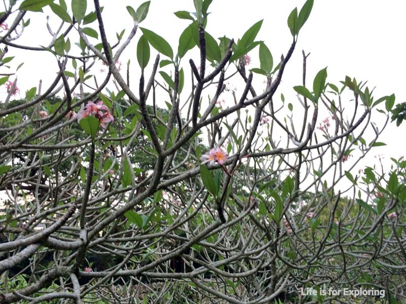L.I.F.E Singapore Botanic Gardens (12)