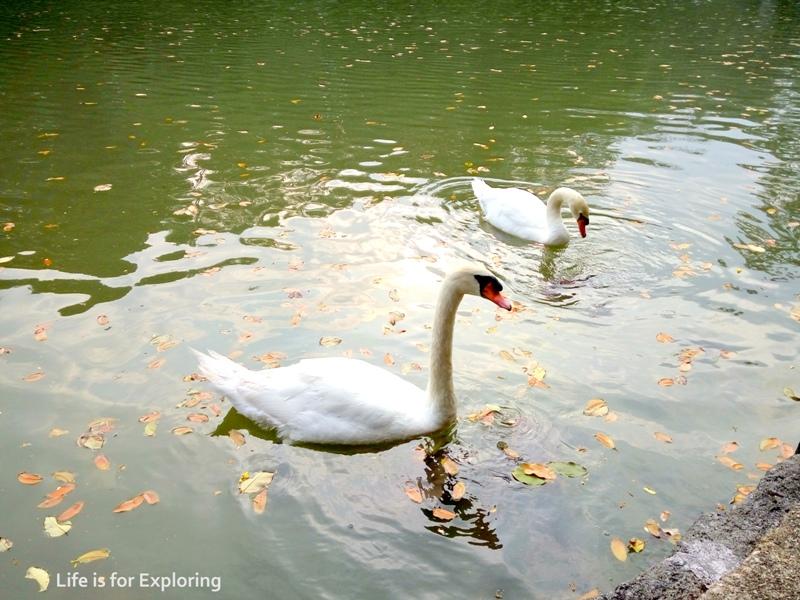 L.I.F.E Singapore Botanic Gardens (16)