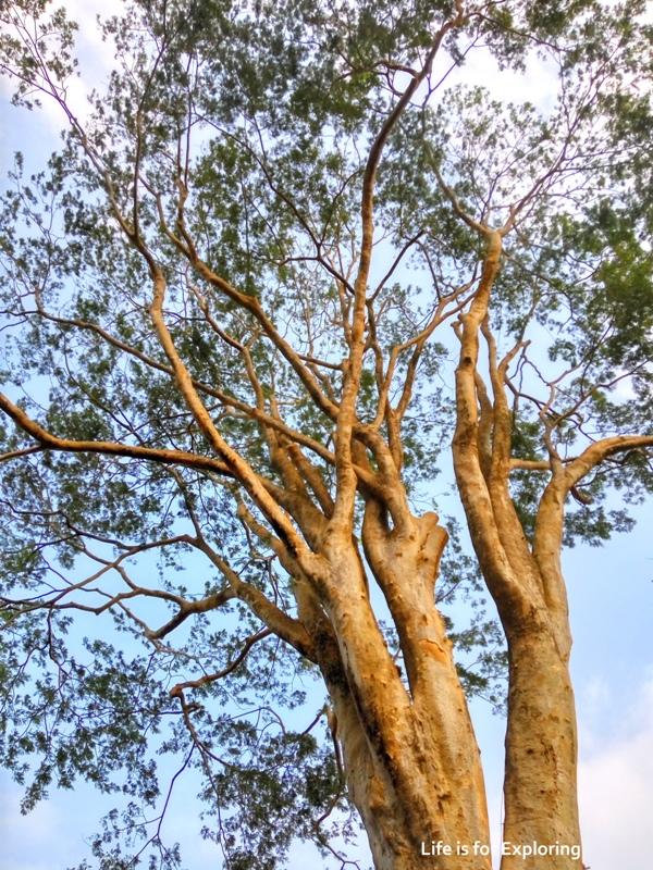 L.I.F.E Singapore Botanic Gardens (17)
