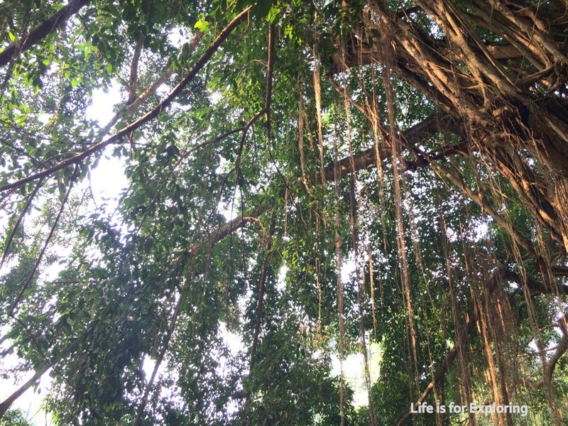 L.I.F.E Singapore Botanic Gardens (3)