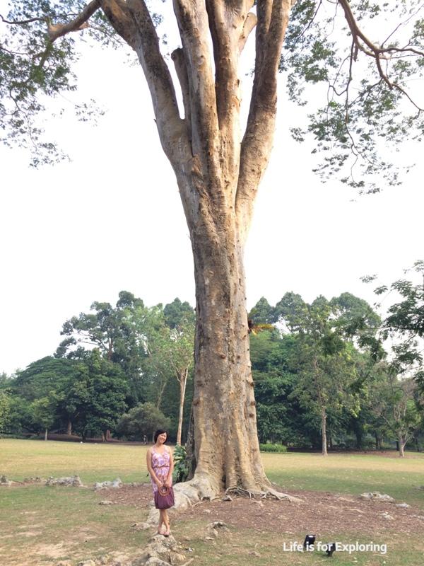 L.I.F.E Singapore Botanic Gardens (9)
