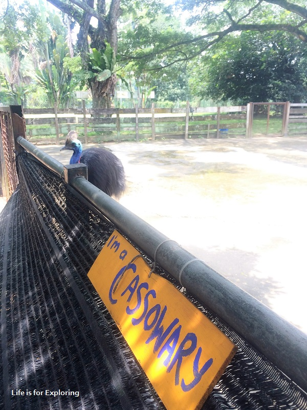 L.I.F.E Animal Resort (1)