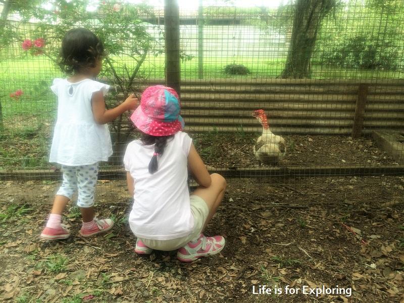 L.I.F.E Animal Resort (12)