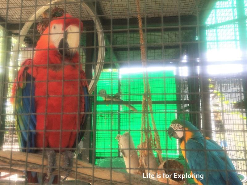 L.I.F.E Animal Resort (15)