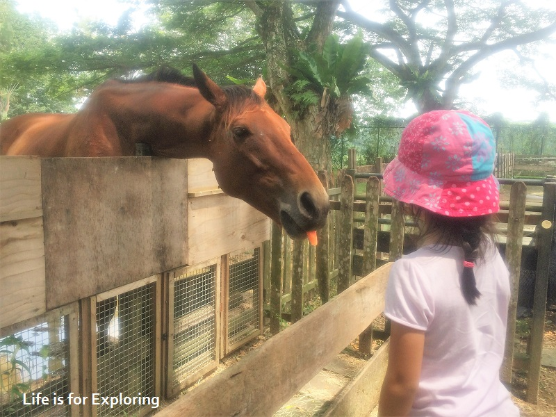 L.I.F.E Animal Resort (17)
