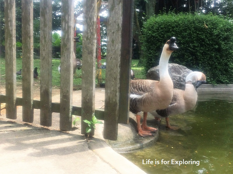 L.I.F.E Animal Resort (19)