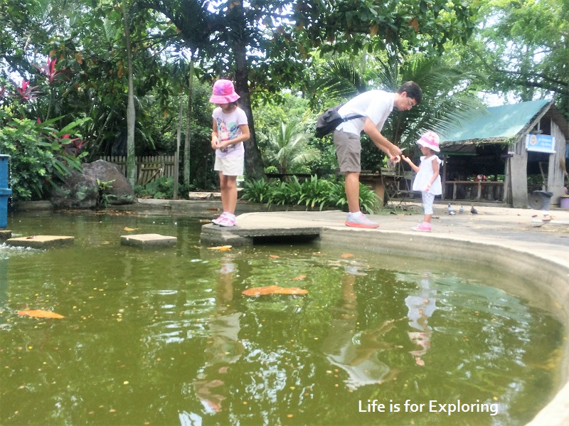 L.I.F.E Animal Resort (4)