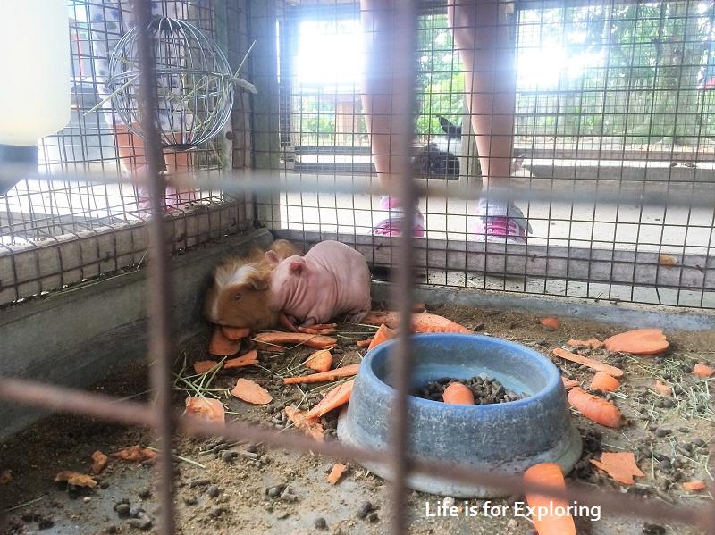 L.I.F.E Animal Resort (5)