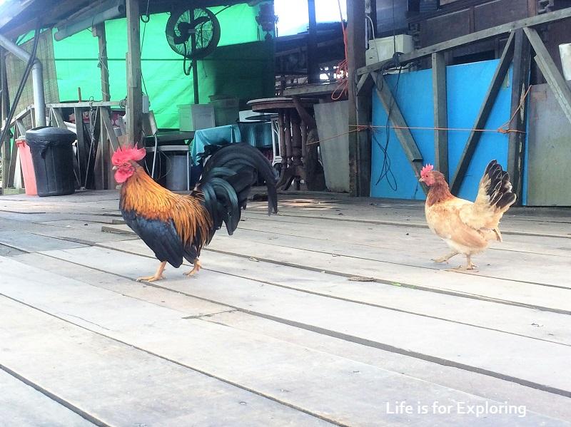 L.I.F.E Animal Resort (6)
