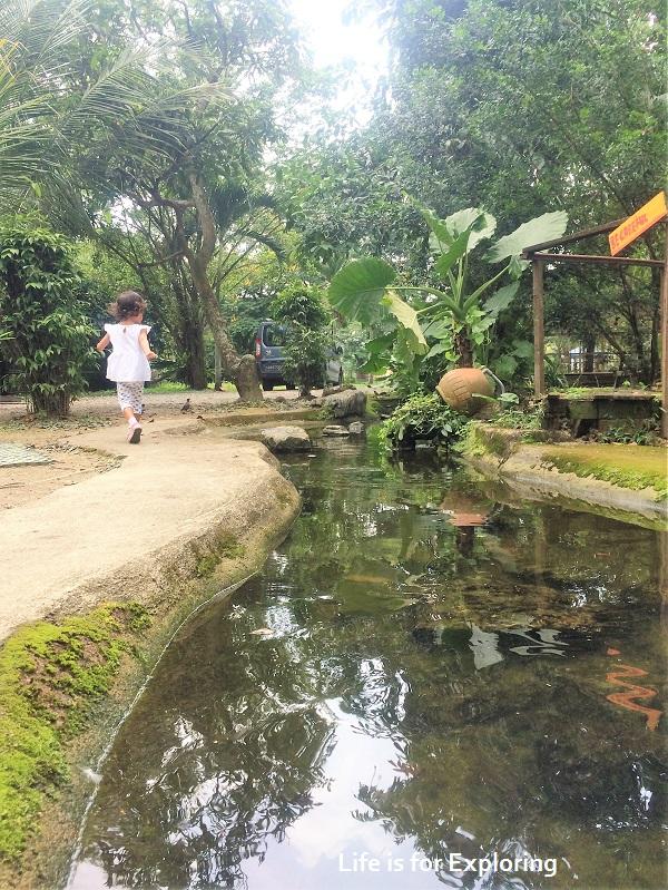 L.I.F.E Animal Resort (9)