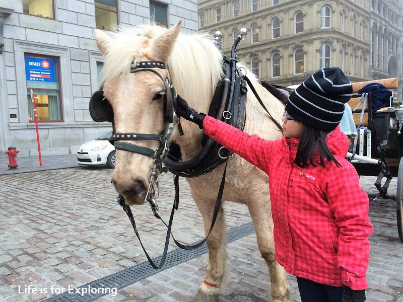 L.I.F.E Montreal Canada Horse Carriage (4)