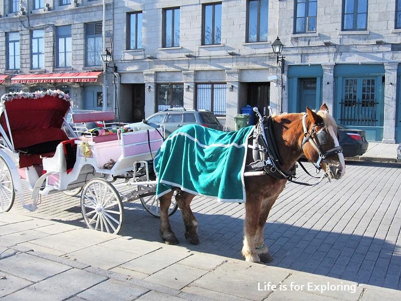 L.I.F.E Montreal Canada Horse Carriage (9)