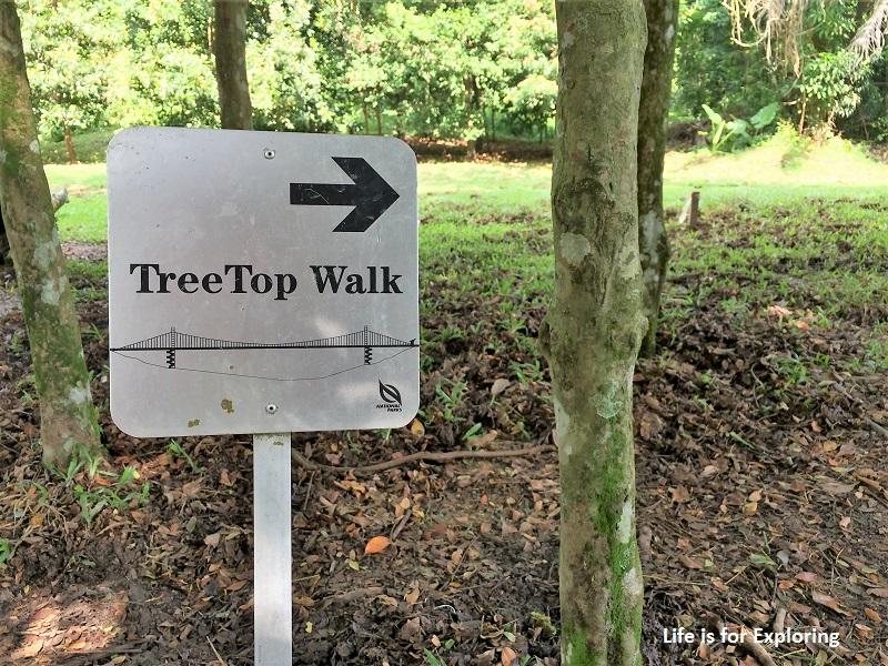 L.I.F.E Treetop Walk Macritchie Reservoir Singapore (1)