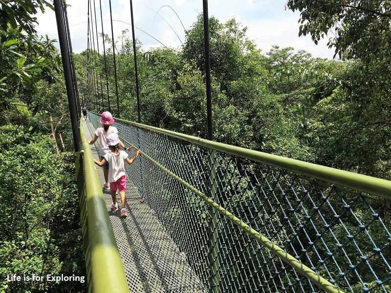 L.I.F.E Treetop Walk Macritchie Reservoir Singapore (11)
