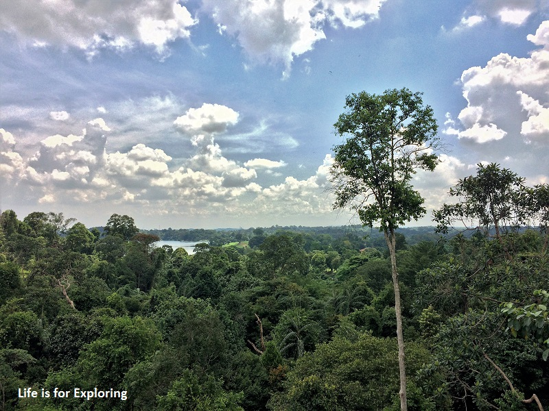 L.I.F.E Treetop Walk Macritchie Reservoir Singapore (14)