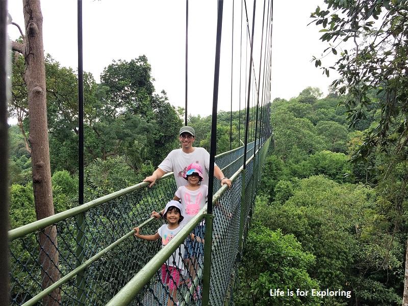 L.I.F.E Treetop Walk Macritchie Reservoir Singapore (17)