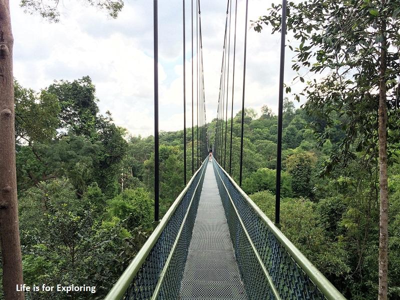 L.I.F.E Treetop Walk Macritchie Reservoir Singapore (18)