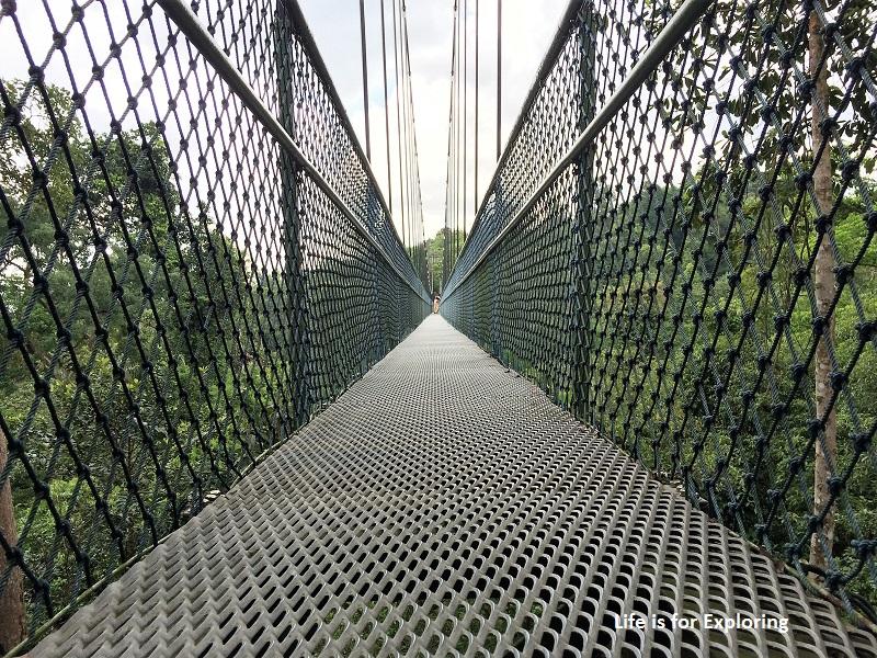 L.I.F.E Treetop Walk Macritchie Reservoir Singapore (19)
