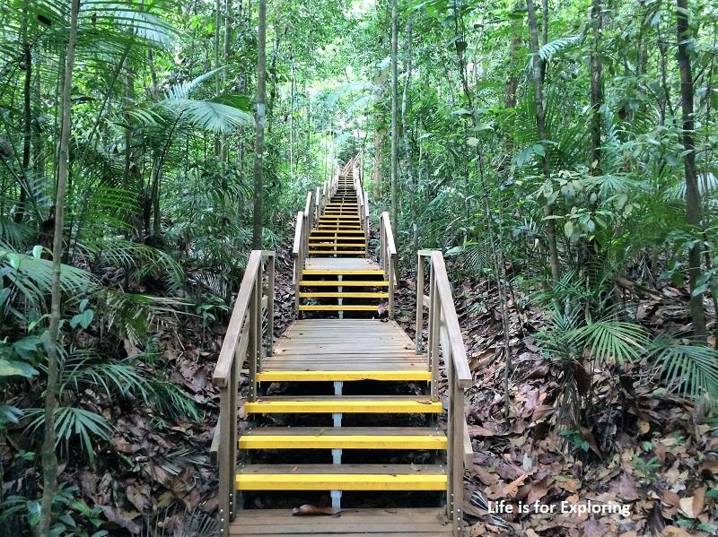 L.I.F.E Treetop Walk Macritchie Reservoir Singapore (20)