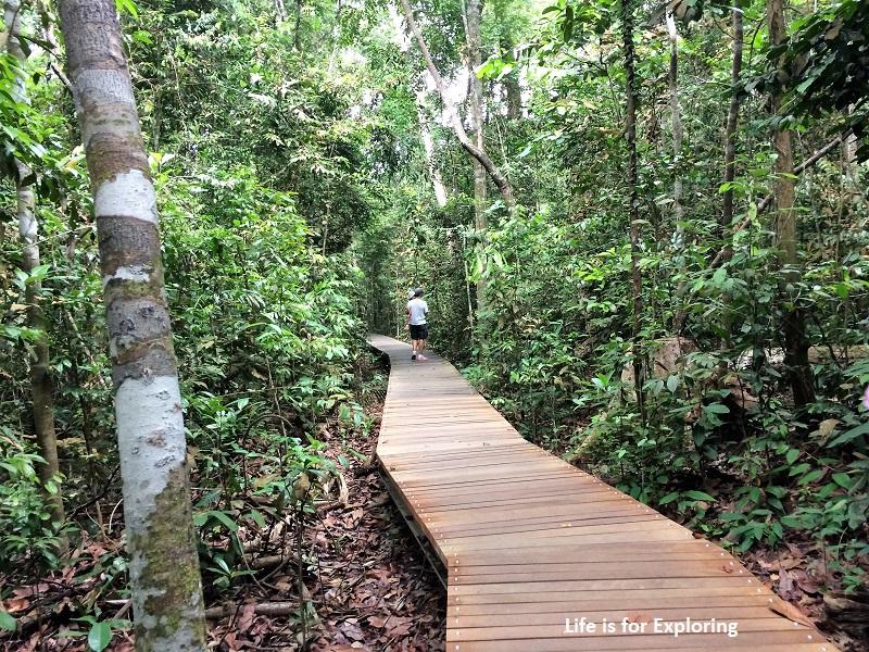 L.I.F.E Treetop Walk Macritchie Reservoir Singapore (21)