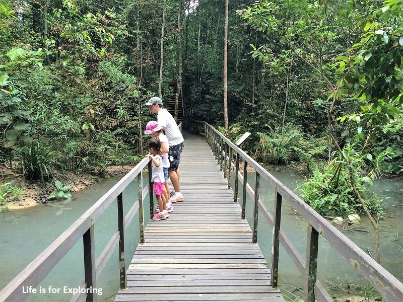 L.I.F.E Treetop Walk Macritchie Reservoir Singapore (22)