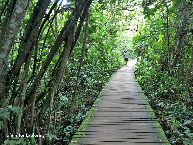 L.I.F.E Treetop Walk Macritchie Reservoir Singapore (26)