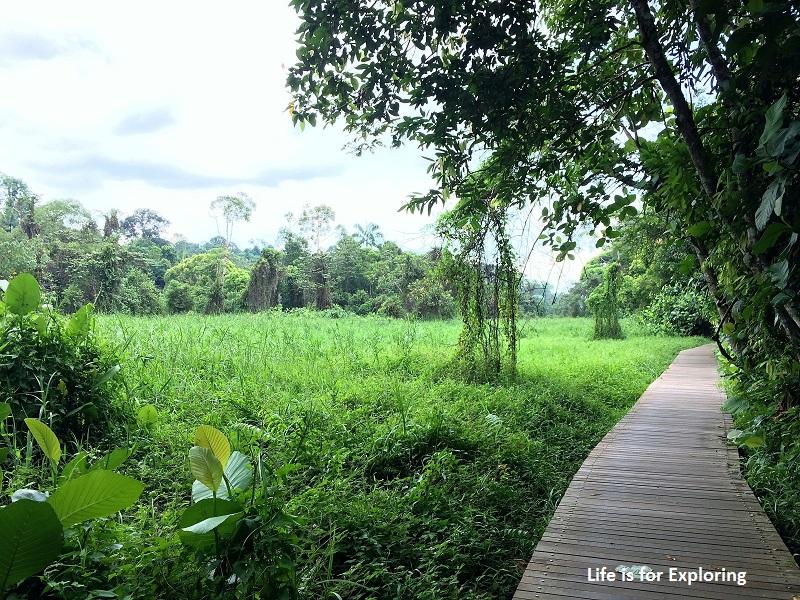 L.I.F.E Treetop Walk Macritchie Reservoir Singapore (27)