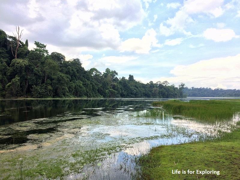 L.I.F.E Treetop Walk Macritchie Reservoir Singapore (32)