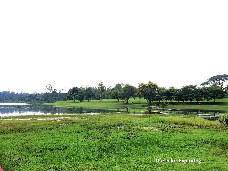 L.I.F.E Treetop Walk Macritchie Reservoir Singapore (36)
