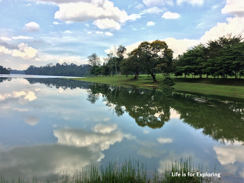 L.I.F.E Treetop Walk Macritchie Reservoir Singapore (37)