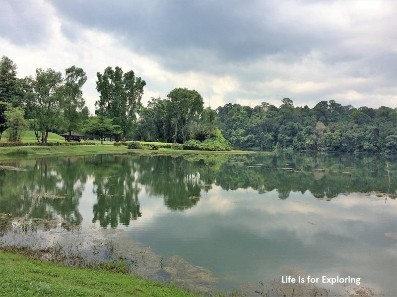 L.I.F.E Treetop Walk Macritchie Reservoir Singapore (38)