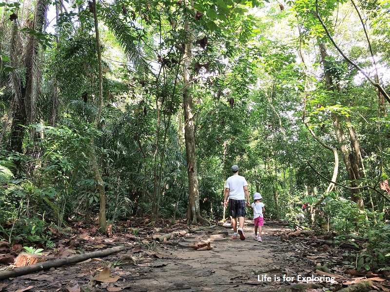 L.I.F.E Treetop Walk Macritchie Reservoir Singapore (4)