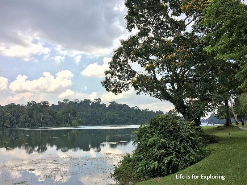 L.I.F.E Treetop Walk Macritchie Reservoir Singapore (40)
