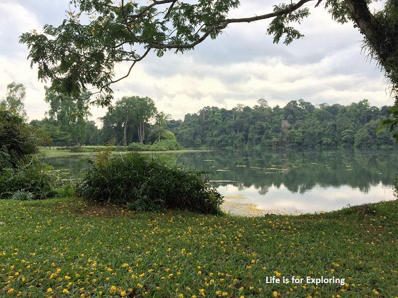 L.I.F.E Treetop Walk Macritchie Reservoir Singapore (41)