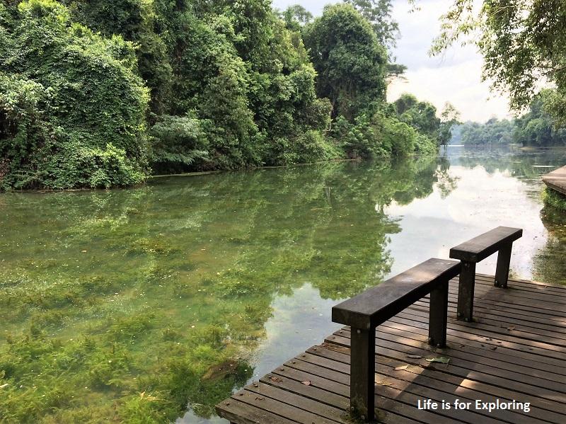 L.I.F.E Treetop Walk Macritchie Reservoir Singapore (43)