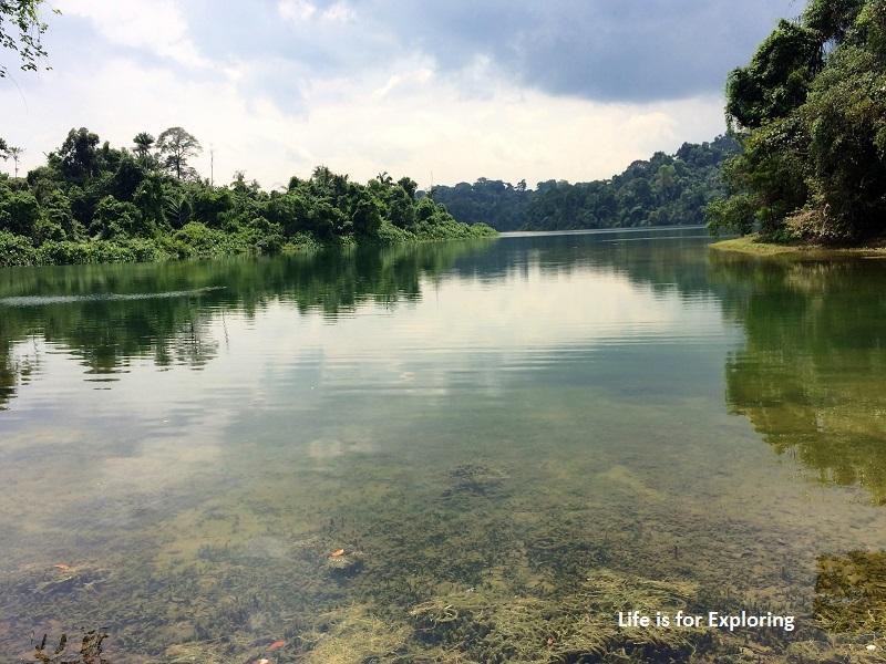 L.I.F.E Treetop Walk Macritchie Reservoir Singapore (46)