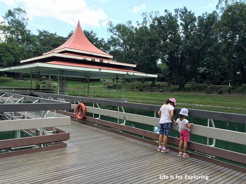 L.I.F.E Treetop Walk Macritchie Reservoir Singapore (52)