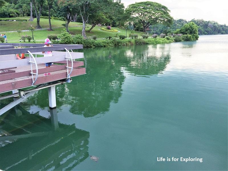 L.I.F.E Treetop Walk Macritchie Reservoir Singapore (54)