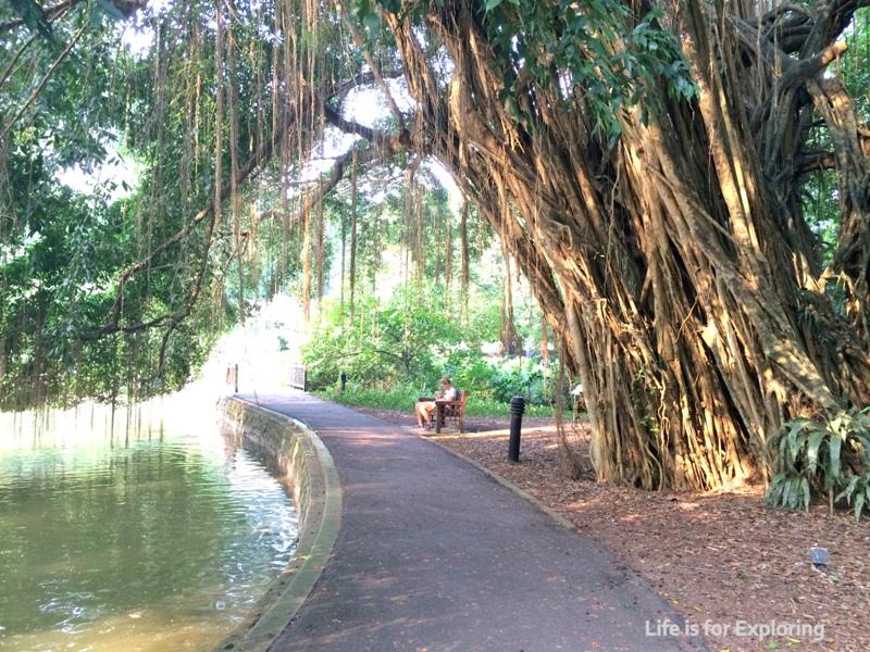 L.I.F.E Botanic Gardens 2