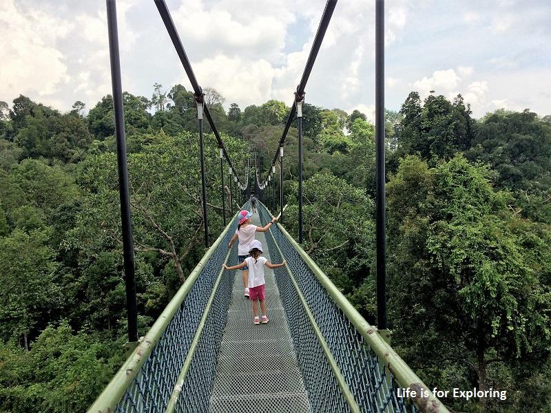 L.I.F.E Treetop Walk Macritchie Reservoir Singapore (15)