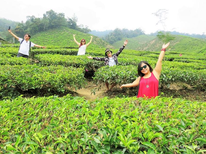 L.I.F.E Cameron Highlands tea plantation (1)a